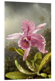 Acrylglas print  Hummingbird and orchid (detail) - Martin Johnson Heade