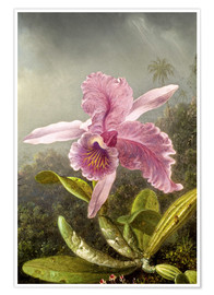 Premium poster Hummingbird and orchid (detail)