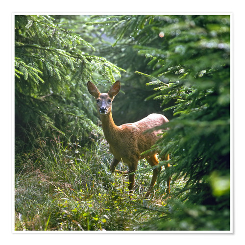 Premium poster The deer in the forest