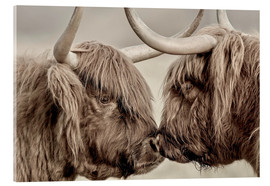 Acrylglas print  Two Scottish highland cattle - imageBROKER