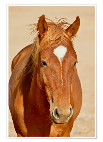 Premium poster faithful look of a brown mare