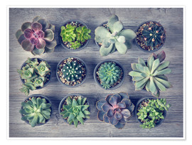 Premium poster Different succulents above the black wooden background