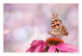 Premium poster  Painted Lady