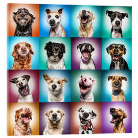 Acrylglas print  More funny dog faces - Manuela Kulpa