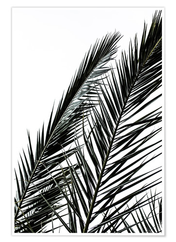 Premium poster Palm Leaves