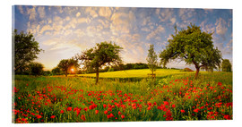 Acrylglas print  Poppy meadow at sunset - Michael Rucker