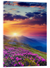 Acrylglas print  Rhododendron blossom in the Carpathians