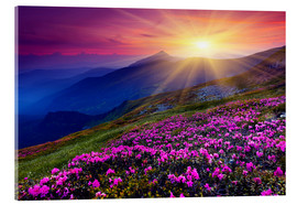 Acrylglas print  Rhododendron in the Carpathians