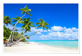 Premium poster White beach and palm trees in the tropics