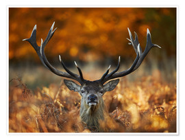 Premium poster The stag king of fire
