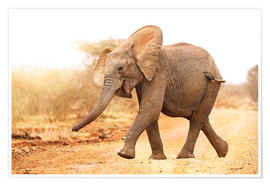 Premium poster Happy elephant, South Africa