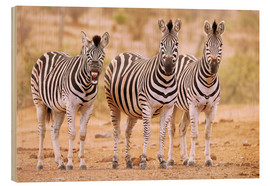 Hout print  Three Zebras, one is so tired - wiw