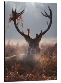 Aluminium print  Deer Stag in Winter - Alex Saberi