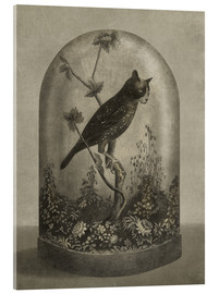 Acrylglas print  Curiosities Cabinet Cat Owl - Terry Fan