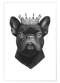 Premium poster The French Bulldog king