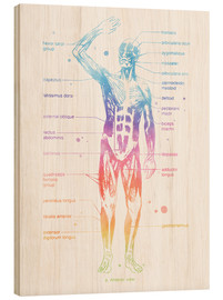 Hout print  Rainbow muscle system I. - Mod Pop Deco