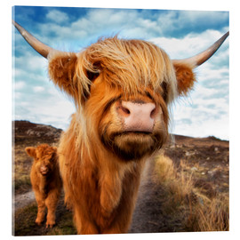 Acrylglas print  Highland cattle with calf - Westend61
