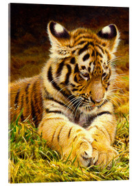 Acrylglas print  Young tiger lying in grass