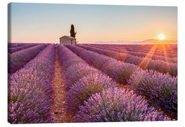 Canvas print  Sunrise over lavender field - age fotostock