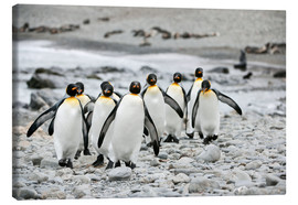 Canvas print  Penguins on the beach - ES Pictures