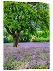 Acrylglas print  Lavender field in Provence - Terry Eggers