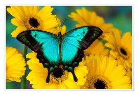 Premium poster Sea green swallowtail