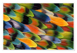 Premium poster Colorful parrot feathers