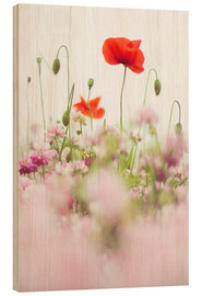 Hout print  Poppies in the field - Bob Daalder