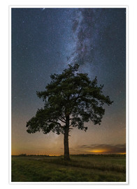 Premium poster Lonely tree under the Milky Way