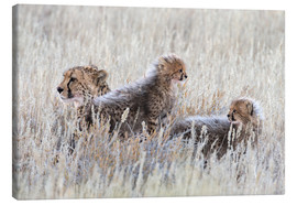 Canvas print  Cheetah with cubs