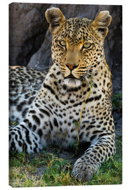 Canvas print  Leopard resting in the shade - Sergio Pitamitz