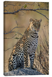 Canvas print  Leopard perched on its rock - James Hager
