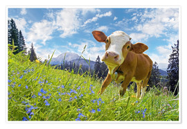 Premium poster Young cattle Muhh