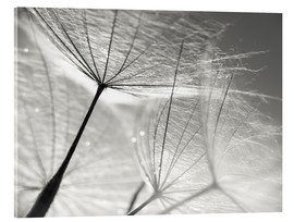 Acrylglas print  Dandelion Umbrella in black and white - Julia Delgado