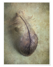 Premium poster Little gray feather
