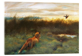 Acrylglas print  Fox and duck - Bruno Andreas Liljefors