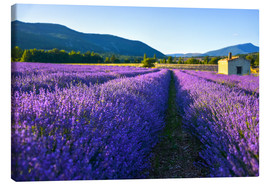 Canvas print  Lavender field with hut - Jürgen Feuerer