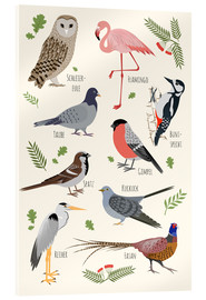 Acrylglas print  Bird species (German) - Kidz Collection