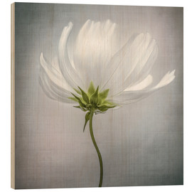 Hout print  Cosmos - Mandy Disher