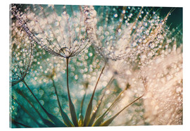 Acrylglas print  Dandelion dropper dream - Julia Delgado
