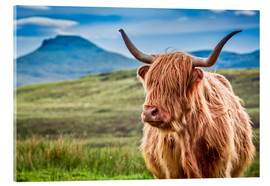 Acrylglas print  Highland cattle, Scotland - Art Couture