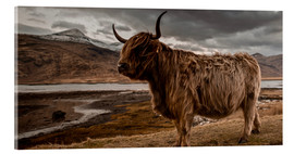 Acrylglas print  Highland cattle - Art Couture