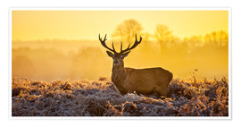 Premium poster  Deer in the autumn forest - Art Couture
